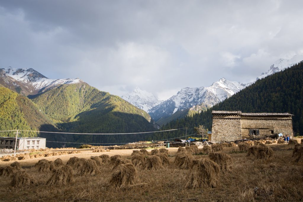 Yading Village Field Tibet