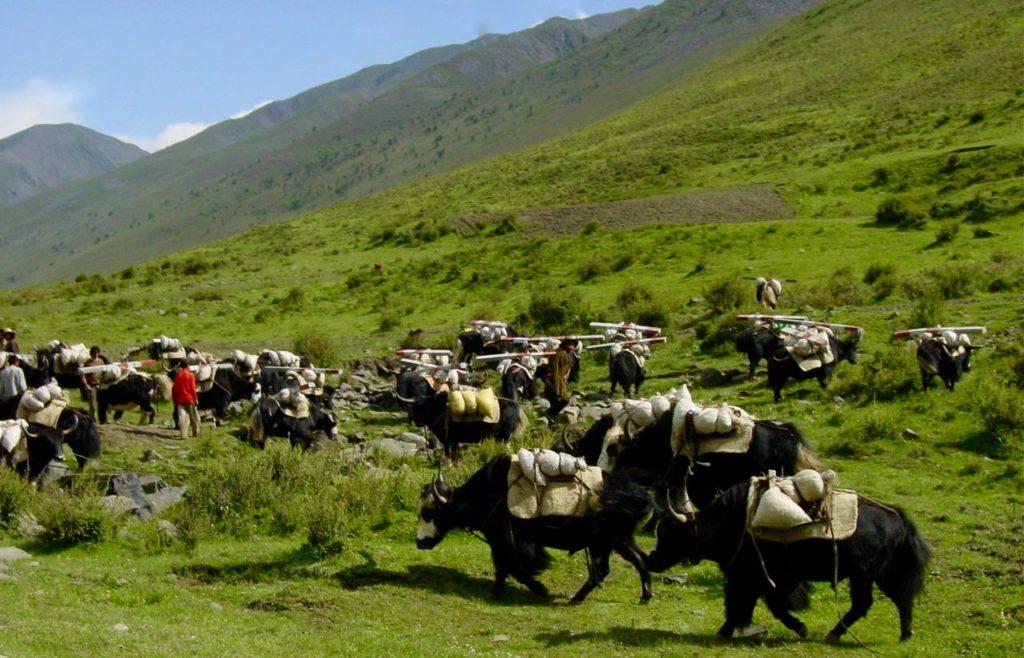 Yaks near Tagong